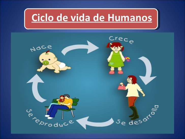 living beings life cycle - life cycle of living things are born grow reproduce and die