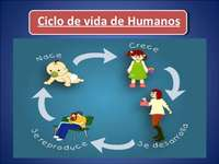 levenscyclus van levende wezens