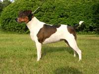 DANISH-SWEDISH COUNTRY DOG - Training and upbringing As an intelligent and versatile dog, he has great predispositions for traini