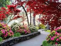 задния двор градина