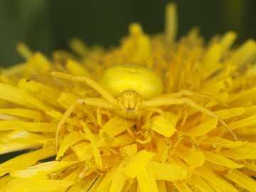 Βιολογία πρόκληση - Τι έκρυβε στο λουλούδι;