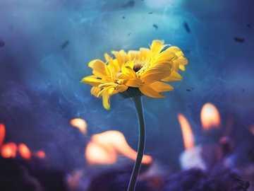 Λουλούδια  - Λουλούδια