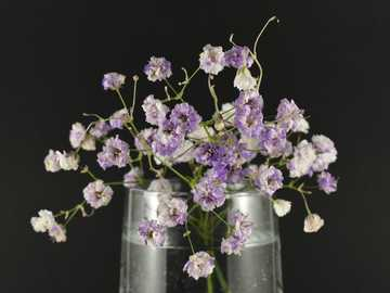 purple and white flowers in clear glass jar - beautiful natural flowers close-up on a dark background.