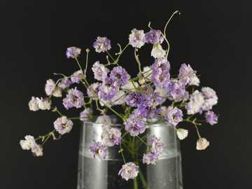 fioletowe i białe kwiaty w przezroczystym szklanym słoju - piękne naturalne kwiaty zbliżenie na ciemnym tle.