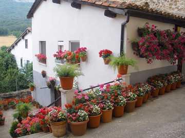 Dom w kwiatach - mały domek w otoczeniu kwiatów