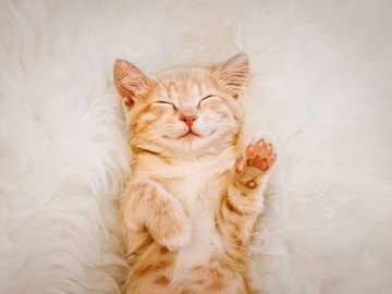 sleeping kitten - orange and white kitten