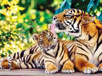 Тигър пъзел