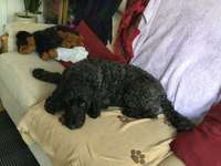 Cachorrinho e Bella - Logan e o cachorro dentro da sala de nanas