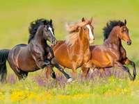 обичам коне