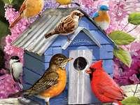 Oiseaux colorés.
