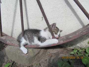 playing kitty - sweet kitty on old wheel