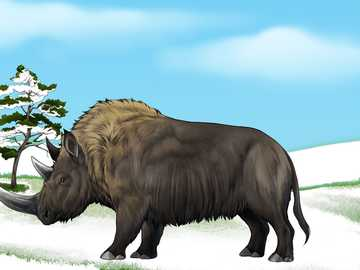 Puzzle with a rhinoceros - The hairy rhino lived in the so-called Ice Age.