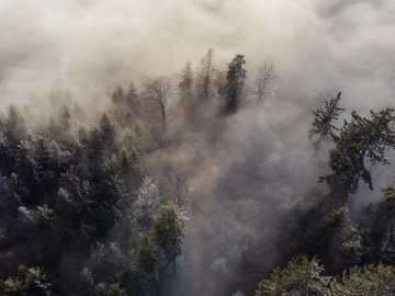 green trees under white clouds - aerial shot of winter trees with clouds and fog.