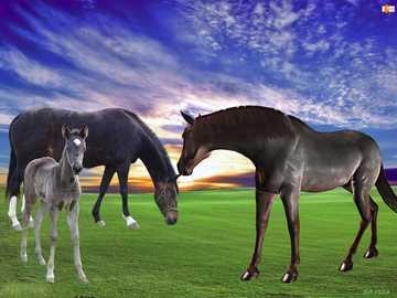 Horses grazing - Horses grazing in the evening