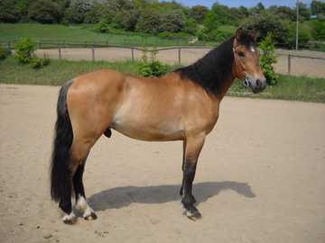 Les chevaux sont géniaux - J'adore l'équitation.