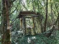 Restos de uma cabana - Bois Prudhomme Élancourt Yvelines