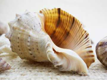 beautiful shell - the natural beauty of sea creatures