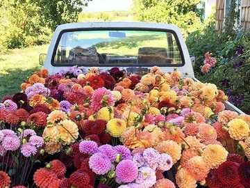 Kwiaty ♥ - Αυτοκίνητο με λουλούδια