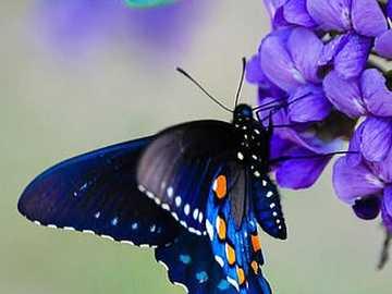 Schmetterling :) - Μπλε πεταλούδα