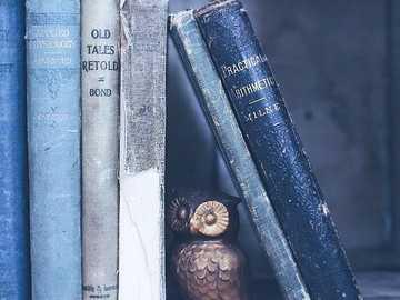 bookshelf - bookshelf and owl