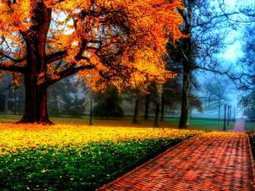 People in nature, Tree - If you like landscapes and put together puzzles, put together this beautiful autumn landscape