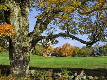 Landscape - Autumn colors of trees