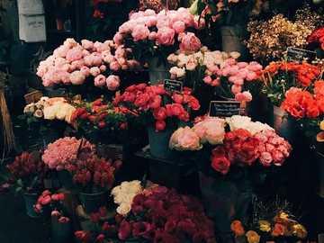 Λουλούδια cd  - Ανθοπωλείο