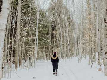 Young woman walking through snowy woods - woman standing between trees on snow during daytime. Maine, USA