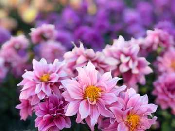 Kwiat miłości - różowe i białe płatki kwiatów. 330 Queens Plate Dr, Etobicoke, ON M9W 7J7, Kanada, Toronto