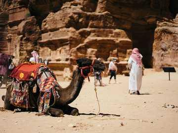 Przystanek wielbłąda - wielbłąd siedzi na ziemi w pobliżu ludzi i skał.