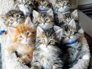 Carino :) - Ένα μάτσο γατάκια