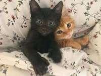 Süße Pferdeschwänze - Süßes Kätzchen in der Bettwäsche :)