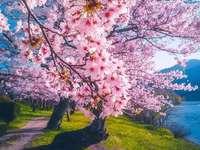 Cuma Cevik Japan