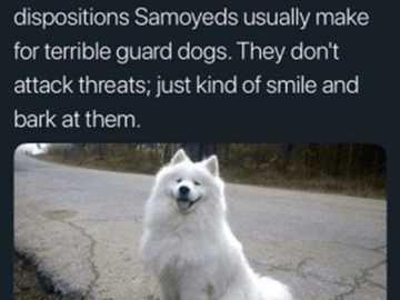 Samoyed wiki - Wikipedia's holiest twitter post