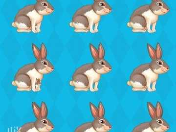 How many rabbits are there? - For each image write the coordinates vertically and horizontally.