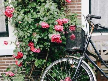 Amsterdam - rower - popularny środek lokomocji w Holandii