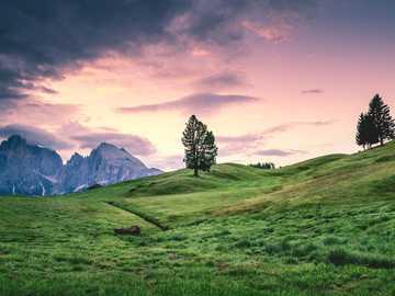 arbre vert sur le terrain avec gazon - Suivez mon Instagram @ karsten.wuerth. Seiser Alm, Kastelruth, Italie