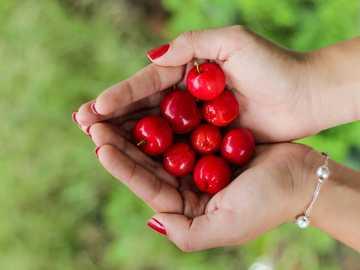 bayas rojas en las manos de la persona - Tiro del primer de la baya sana.