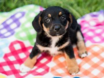 sweet doggy - nice dog :) :) :) !!!!!!!!!!