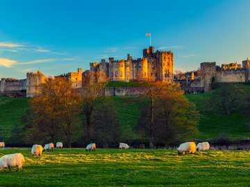 Zamek Alnwick, Anglia - Nakręcono tam 3 serie o Harrym Potterze