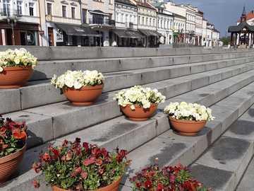 Blumentöpfe auf dem Markt in Rzeszów - Blumentöpfe auf dem Markt in Rzeszów