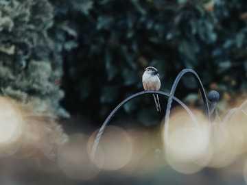 brązowy i biały ptak na gałęzi drzewa - Długonoga sikora w moim ogrodzie, zanim burza potoczyła się w ten weekend. Choć są tak powszech
