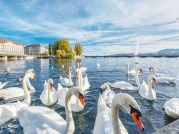 Switzerland. - Europe. Switzerland. Geneva.