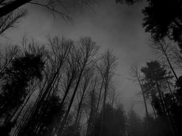 Dark Forest - The hard puzzle , Made by Eshaal