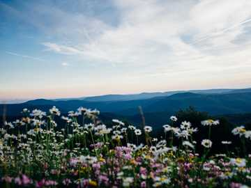 Mountain View - white and pink petaled flowering plants. Monongalia County, United States
