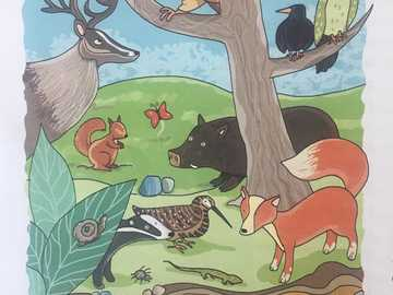 The animals of the. - All these animals have in common the place where they live, which one?