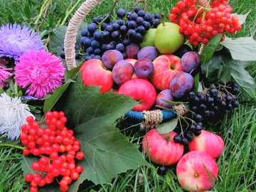 Fruits And Flowers On The Grass - Fruits And Flowers On The Grass