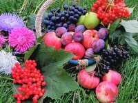 Fruit En Bloemen Op Het Gras