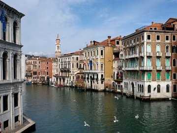 Canales de venecia - Los canales se llenan de cisnes demostrando que la cuarentena ayuda a los animales.