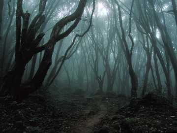 Dark forest - Forest photography, unknown author.